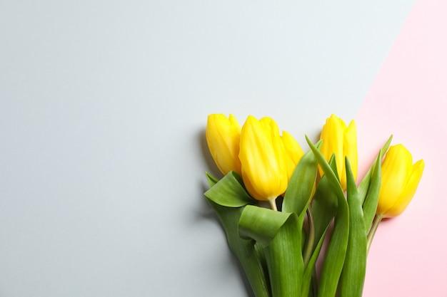 Piękne tulipany na świetle, widok z góry