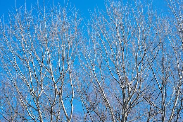 Piękne ujęcie bezlistnych drzew na niebieskim niebie