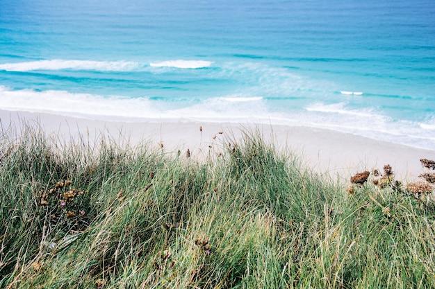 Piękne ujęcie błękitnego morza i plaży z piaskiem i zieloną trawą