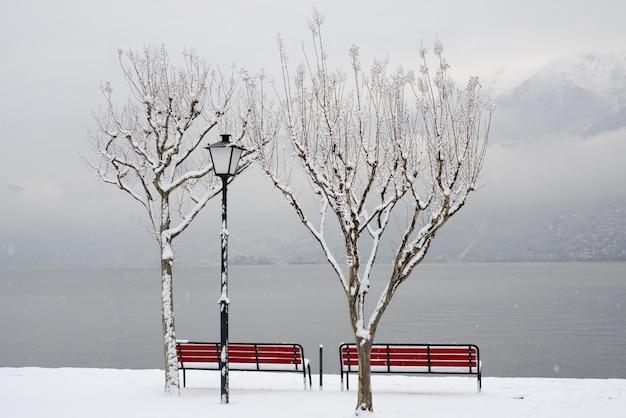 Piękne ujęcie czerwonych ławek w pobliżu brzegu w zimie pod drzewami