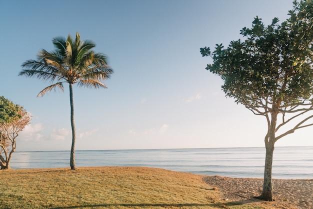 Piękne ujęcie drzew na złotej, piaszczystej plaży z jasnym błękitnym niebem w tle