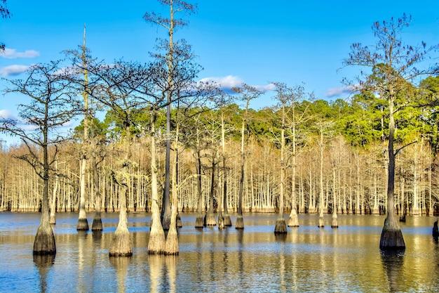 Piękne ujęcie drzew nad jeziorem