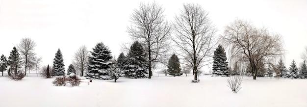 Piękne ujęcie drzew o powierzchni pokrytej śniegiem zimą