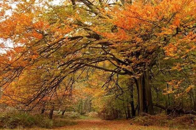 Piękne ujęcie drzew z kolorowymi liśćmi w jesiennym lesie