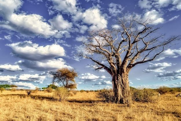 Piękne ujęcie drzewa na równinach sawanny z błękitnym niebem