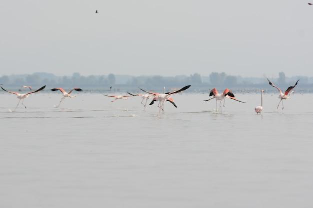 Piękne ujęcie flamingów w spokojnym jeziorze z drzewami w tle w mglisty dzień