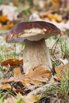 Piękne ujęcie grzyba na polu jesienią