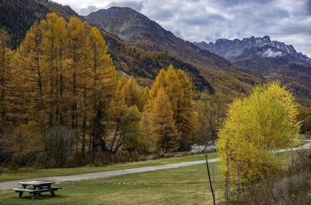 Piękne ujęcie jesiennego lasu pełnego żółtych drzew
