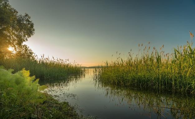 Piękne ujęcie jeziora otoczonego drzewami i krzewami o zachodzie słońca