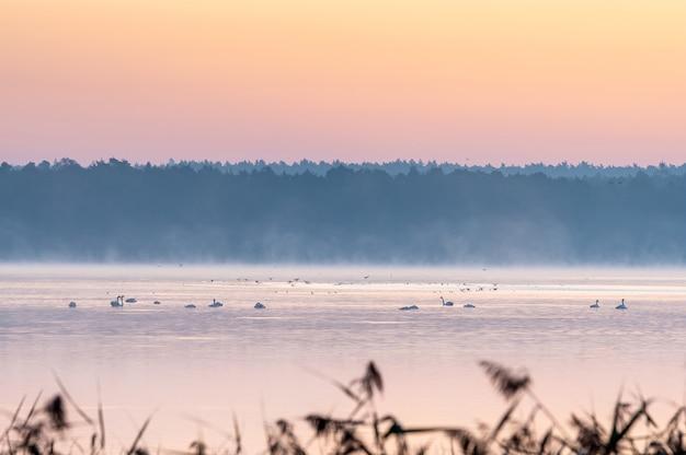 Piękne ujęcie jeziora podczas zachodu słońca z roślinami na pierwszym planie