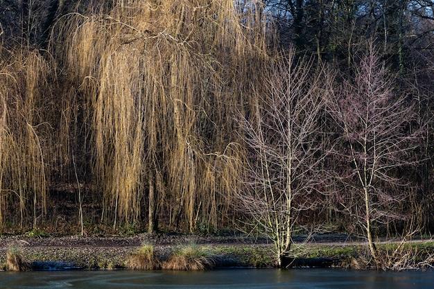 Piękne ujęcie jeziora z drzewami w parku leśnym maksimir w zagrzebiu w ciągu dnia