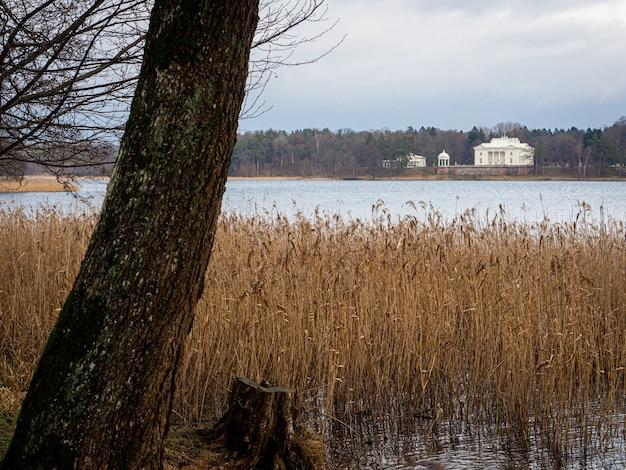 Piękne ujęcie jeziora z suszoną trawą i drzewem i białym budynkiem w oddali