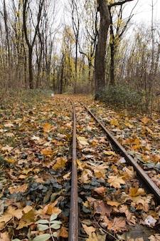 Piękne ujęcie kolorowych liści na kolei w słoneczny dzień