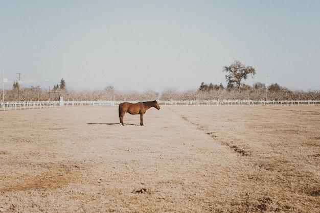 Piękne ujęcie konia stojącego na polu suchej trawy z drzewami i czystym niebem