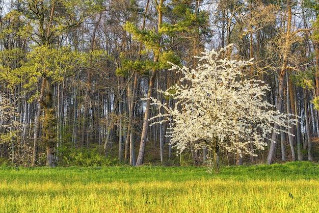 Piękne ujęcie kwitnącego białego drzewa otoczonego zielenią