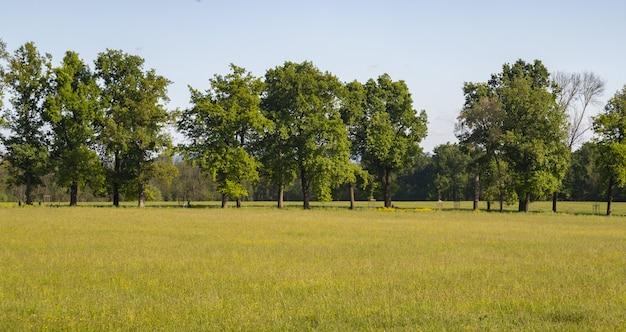 Piękne ujęcie łąki z drzewami na powierzchni