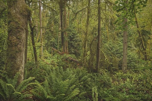 Piękne ujęcie lasu z omszałymi drzewami i zielonymi liśćmi roślin