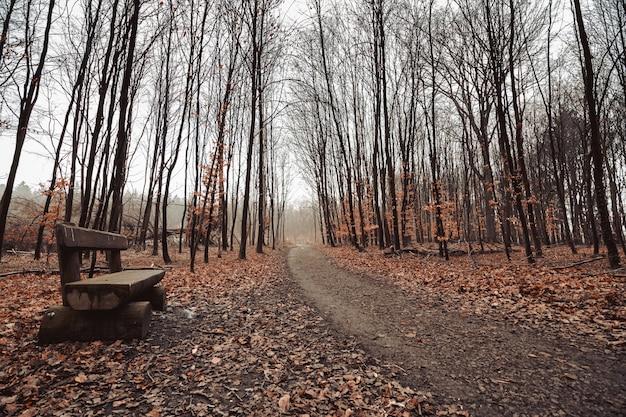 Piękne ujęcie leśnej drogi z ponurym niebem