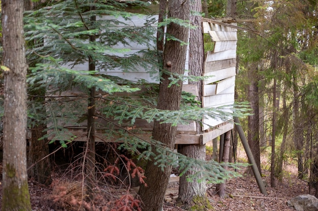 Piękne ujęcie małego drewnianego domku w lesie