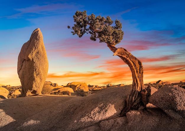 Piękne ujęcie opuszczonego obszaru ze skałą głazową i odizolowanym drzewem palmy sabałowej