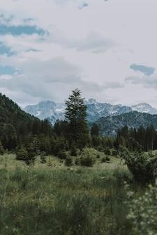 Piękne ujęcie ośnieżonych gór i zielonych drzew pod zachmurzonym niebem
