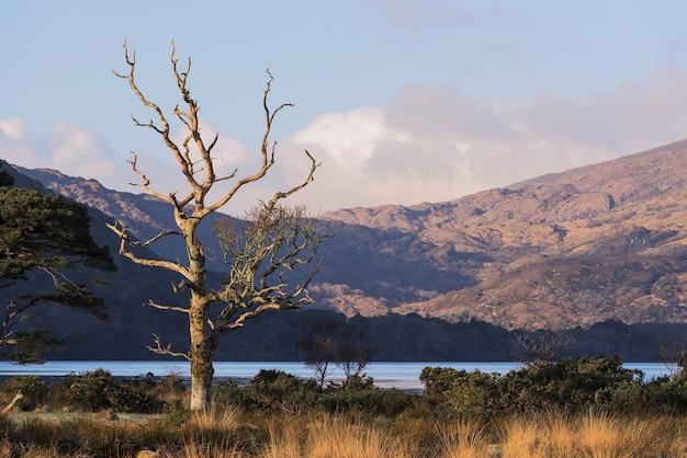 Piękne ujęcie parku narodowego killarney z jeziorem muckross w killarney, hrabstwo kerry, irlandia