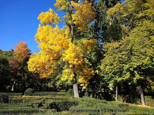 Piękne ujęcie parku pełnego drzew i bezchmurnego nieba w tle w aranjuez w hiszpanii.