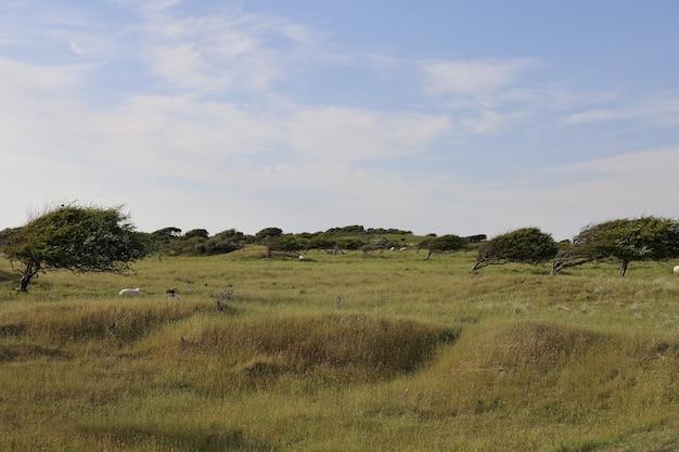 Piękne ujęcie pola w rubjerg, lonstrup w ciągu dnia