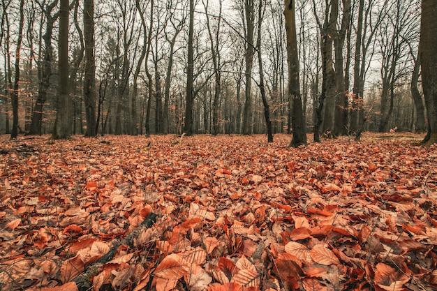 Piękne ujęcie przerażającego lasu z ponurym niebem