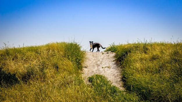 Piękne ujęcie psa biegnącego na wzgórzu z jasnym, błękitnym niebem