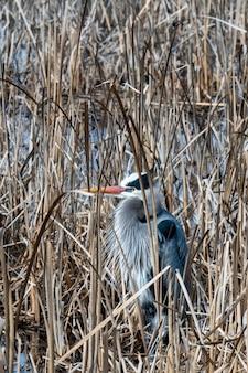 Piękne ujęcie ptaka w wodzie z suszoną trawą zimą
