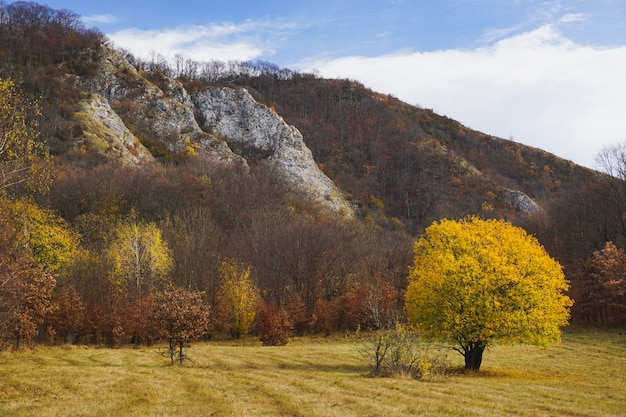 Piękne ujęcie samotnego drzewa z żółtymi liśćmi stojącego na polu otoczonym wzgórzami