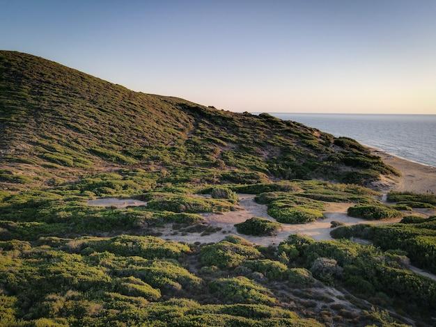 Piękne ujęcie scenerii, zieleni nad brzegiem morza