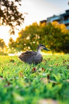 Piękne ujęcie ślicznej krzyżówki chodzenia po trawie