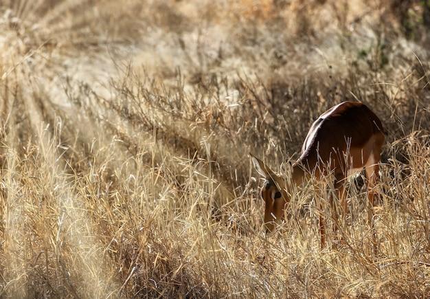Piękne ujęcie słodkie jelenia na polach