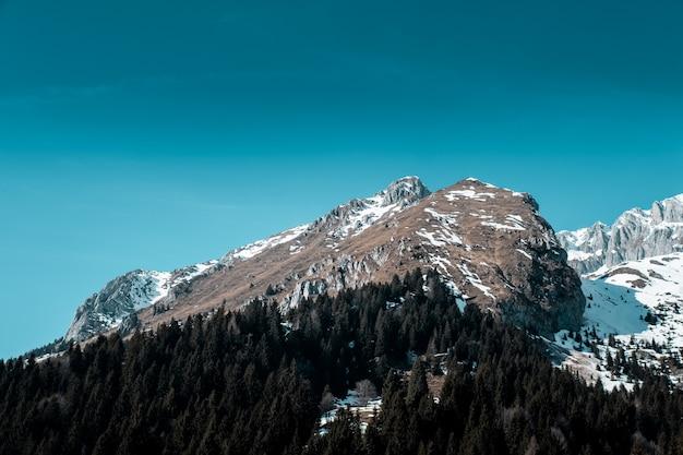 Piękne ujęcie sosnowego lasu w górach pokryte śniegiem