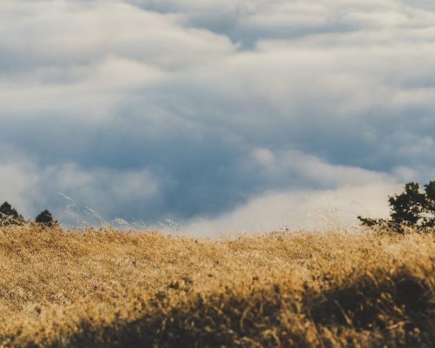 Piękne ujęcie suchego trawiastego pola z pochmurnego nieba