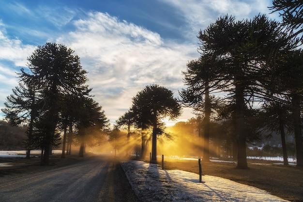 Piękne ujęcie światła słonecznego w lesie w zimowy dzień