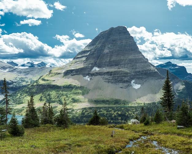 Piękne ujęcie trawiastego pola i drzew z górą montana w oddali