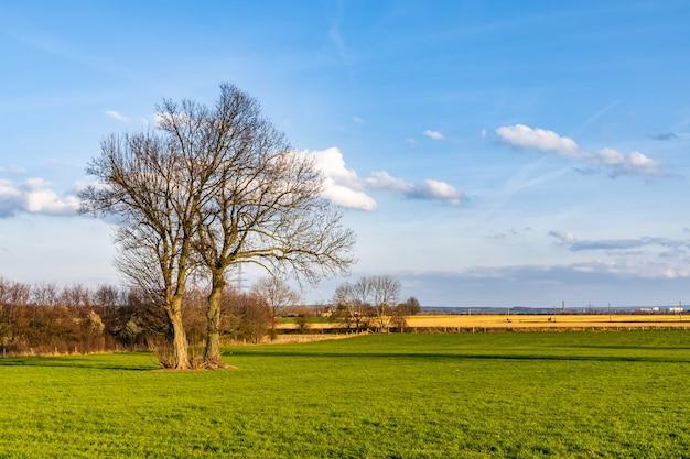 Piękne ujęcie trawiastego pola z bezlistnym drzewem pod błękitnym niebem
