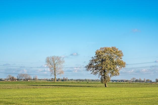 Piękne ujęcie trawiastego pola z drzewami i błękitne niebo w tle