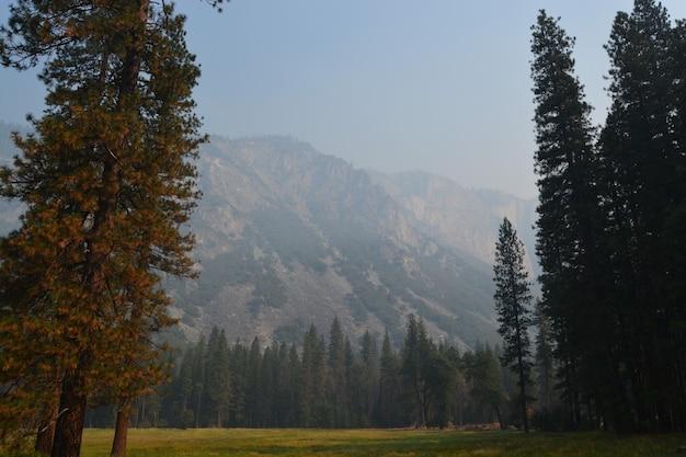 Piękne ujęcie trawiastego pola z drzewami w pobliżu góry pod mglistym niebem