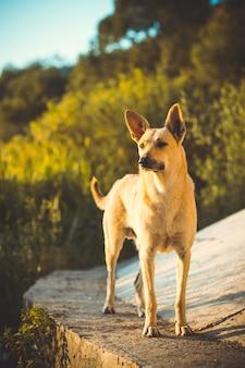 Piękne ujęcie uroczego psa z podniesionymi uszami