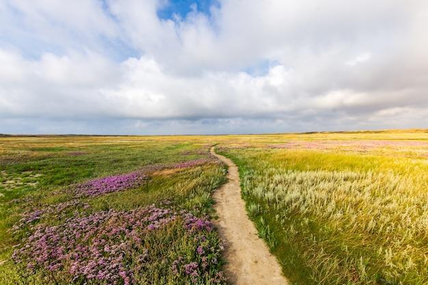 Piękne ujęcie wąskiej ścieżki pośrodku trawiastego pola z kwiatami pod pochmurnym niebem