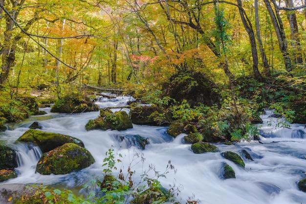 Piękne ujęcie wodospadu w strumieniu wodnym otoczonym lasem