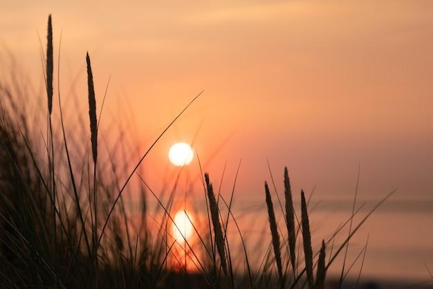 Piękne ujęcie wysokiej trawy o zachodzie słońca