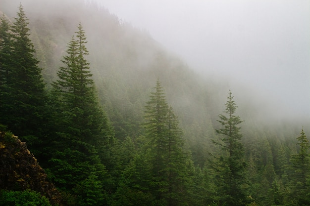 Piękne ujęcie zalesionej góry we mgle