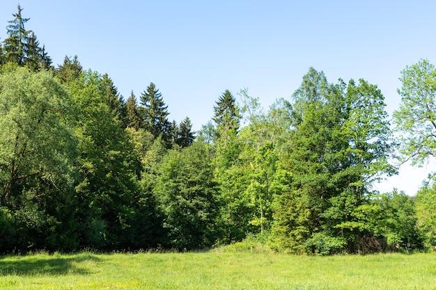Piękne ujęcie zieleni pod jasnym, błękitnym niebem