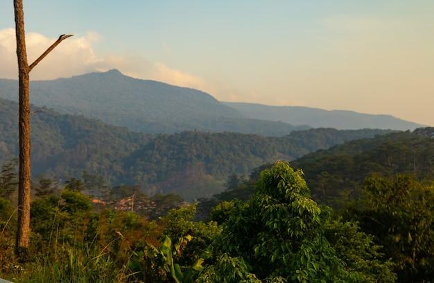 Piękne ujęcie zielonych roślin z górami