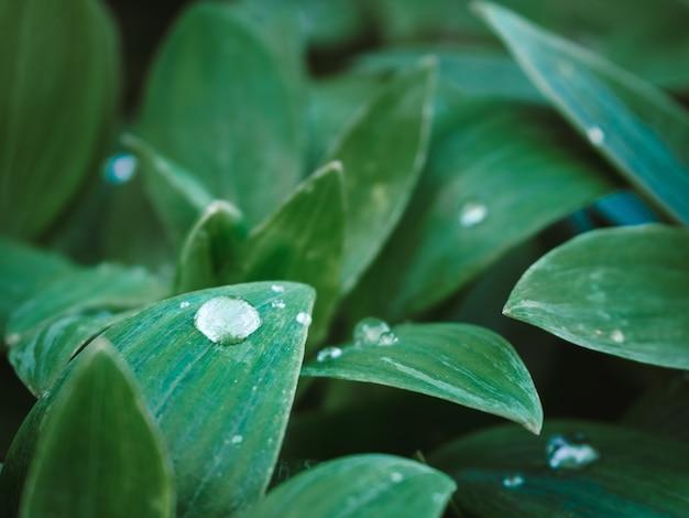 Piękne ujęcie zielonych roślin z kroplami wody na liściach w parku